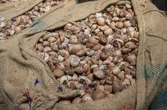 Ξηρό betel - καρύδι σε έναν σάκο στοκ φωτογραφία