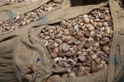 Ξηρό betel - καρύδι σε έναν σάκο στοκ φωτογραφία με δικαίωμα ελεύθερης χρήσης