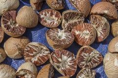 Ξηρό betel - καρύδι. στοκ φωτογραφία με δικαίωμα ελεύθερης χρήσης