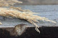 Ξηρό Calamagrostis σε έναν ξύλινο πίνακα Στοκ Φωτογραφίες