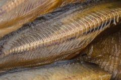 Ξηρό fishbone Στοκ εικόνες με δικαίωμα ελεύθερης χρήσης