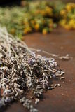 ξηρό lavender Στοκ Εικόνα