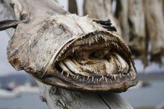ξηρό monkfish Στοκ Φωτογραφίες