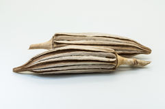 ξηρό okra Στοκ εικόνες με δικαίωμα ελεύθερης χρήσης