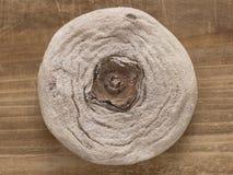 Ξηρό persimmon Στοκ εικόνα με δικαίωμα ελεύθερης χρήσης