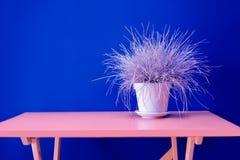 Ξηρό ryegrass βάζων σίτου ξύλινο επιτραπέζιο flowerpot χλόης raaigras ρόδινο μπλε εσωτερικό έννοιας σχεδίου τοίχων άσπρο γκρίζο ω στοκ εικόνα