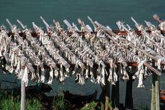 ξηρό stockfish Στοκ Φωτογραφία