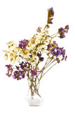 ξηρό vase λουλουδιών στοκ φωτογραφία