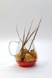 ξηρό vase τριαντάφυλλων γυαλ&io Στοκ φωτογραφία με δικαίωμα ελεύθερης χρήσης