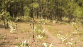 Ξηρό Wildflowers σε ένα ίχνος περπατήματος μέσω ενός δάσους Στοκ Εικόνες
