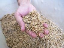 Ξοδευμένο σιτάρι διαθέσιμο στοκ εικόνες με δικαίωμα ελεύθερης χρήσης