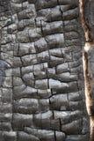 ξυλάνθρακας Στοκ Εικόνα