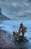 ξυλεία θάλασσας νύχτας Στοκ εικόνες με δικαίωμα ελεύθερης χρήσης