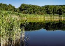 ξυλεία λιμνών Στοκ Φωτογραφία