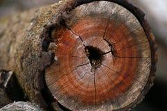 ξυλεία οξιών Στοκ Εικόνα