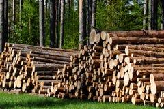 ξυλεία πεύκων στοκ εικόνα με δικαίωμα ελεύθερης χρήσης