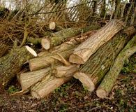 ξυλεία σωρών Στοκ φωτογραφία με δικαίωμα ελεύθερης χρήσης