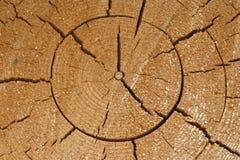 ξυλεία στοκ εικόνα