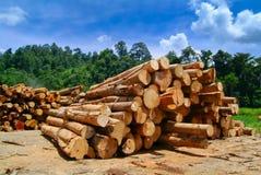 ξυλεία Στοκ εικόνες με δικαίωμα ελεύθερης χρήσης