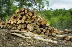 ξυλεία Virgin αποκοπών Στοκ φωτογραφίες με δικαίωμα ελεύθερης χρήσης