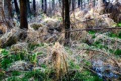 Ξυπνώντας φύση στο δάσος Στοκ Εικόνες