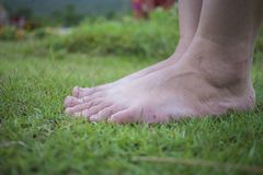Ξυπόλυτο περπάτημα της νέας γυναίκας στη φρέσκια, πράσινη χλόη το ηλιόλουστο καλοκαίρι το πρωί Αναπαυτική στιγμή r Brigh στοκ φωτογραφίες με δικαίωμα ελεύθερης χρήσης