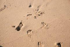 Ξυπόλυτες διαδρομές στοκ εικόνες με δικαίωμα ελεύθερης χρήσης