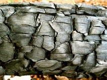 Ξυλάνθρακας του ξύλου Στοκ φωτογραφίες με δικαίωμα ελεύθερης χρήσης