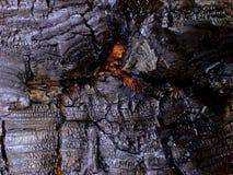 ξυλάνθρακας Στοκ εικόνα με δικαίωμα ελεύθερης χρήσης