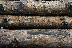 Ξυλεία πεύκων Στοκ φωτογραφία με δικαίωμα ελεύθερης χρήσης