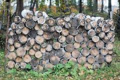 Ξυλεία σημύδων Στοκ φωτογραφία με δικαίωμα ελεύθερης χρήσης