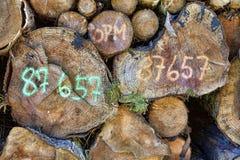 Ξυλεία στη φυτεία Δανία δική σου στοκ φωτογραφία με δικαίωμα ελεύθερης χρήσης