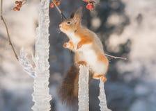 Ξυλοπόδαρα παγακιών Στοκ φωτογραφία με δικαίωμα ελεύθερης χρήσης