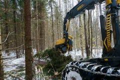 Ξυλουργική στις δασικές ερυθρελάτες περικοπών φορτωτών κούτσουρων στοκ εικόνες με δικαίωμα ελεύθερης χρήσης
