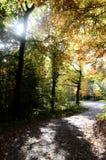 Ξύλα και δρόμος φθινοπώρου Στοκ Φωτογραφία