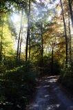 Ξύλα και δρόμος φθινοπώρου Στοκ φωτογραφίες με δικαίωμα ελεύθερης χρήσης