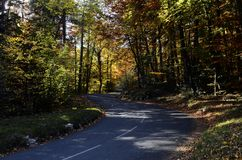 Ξύλα και δρόμος φθινοπώρου Στοκ Φωτογραφίες