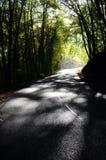Ξύλα και δρόμος φθινοπώρου Στοκ Εικόνες