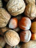 ξύλα καρυδιάς φουντουκ& στοκ φωτογραφίες