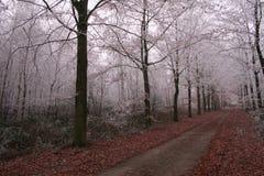 Ξύλα στο wintertime με τα παγωμένα δέντρα Στοκ φωτογραφία με δικαίωμα ελεύθερης χρήσης