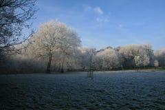 Ξύλα στο wintertime με τα παγωμένα δέντρα Στοκ φωτογραφίες με δικαίωμα ελεύθερης χρήσης