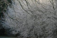 Ξύλα στο wintertime με τα παγωμένα δέντρα Στοκ Εικόνα