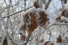 Ξύλα στο wintertime με τα παγωμένα δέντρα Στοκ εικόνες με δικαίωμα ελεύθερης χρήσης