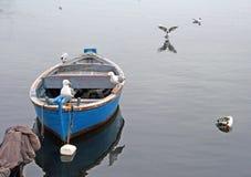 Ξύλινα βάρκα και seagulls Στοκ Εικόνες
