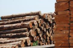 ξύλινα δάση σωρών χαρτονιών &alpha Στοκ εικόνα με δικαίωμα ελεύθερης χρήσης