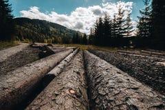 Ξύλινα κούτσουρα που τοποθετούνται στο έδαφος Στοκ εικόνα με δικαίωμα ελεύθερης χρήσης