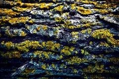 Ξύλινα σύσταση και υπόβαθρο, παλαιά ξύλινη σύσταση με την πράσινη σύσταση βρύου Στοκ Φωτογραφίες
