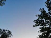 Ξύλινες πράσινες σκιές και while=blue φως στοκ εικόνες με δικαίωμα ελεύθερης χρήσης