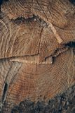 Ξύλινες σύσταση και ανασκόπηση Σύσταση κορμών δέντρων περικοπών Μακρο άποψη της κομμένων σύστασης και του υποβάθρου κορμών δέντρω Στοκ φωτογραφίες με δικαίωμα ελεύθερης χρήσης