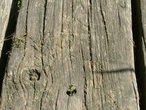Ξύλινη ακτίνα Στοκ Φωτογραφία